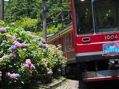 箱根あじさい電車でゆく 阿弥陀寺・箱根湯寮日帰り温泉の旅