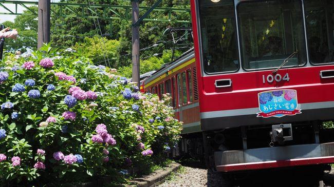 箱根山の火山活動が高まり小規模な噴火の可能性があるとして警戒レベル<br />が2(火口周辺規制)に引き上げられた箱根。この影響で年間2千万人が<br />訪れると言われている観光客が激減しているらしい。<br />現在立ち入り規制がされているのは大涌谷周辺のみで箱根町によれば警戒<br />区域は面積にすると僅か0.3%。残りの99.7%はいつもと変わりないそうだ。<br /><br />これはいかん、神奈川県民として応援しなければ (。-`ω-)ノ!!<br /><br /><br />※2015.6.30 箱根山は小規模な噴火を確認し警戒レベル3に引き上げられました。これから行かれる方は最新の情報をご確認の上お出かけ下さい。<br /><br /><br /><br /><br /><br /><br />