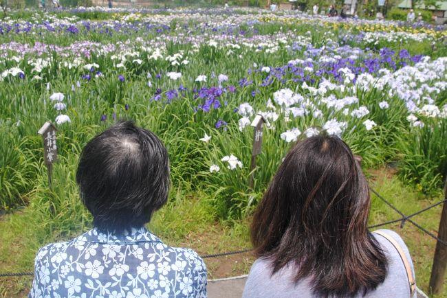 普段はリハビリ施設で頑張っている義母を連れ、家内と3人で佐原へ。<br />花好きの義母の為に,まずは水郷佐原の水生植物園へ。<br />ちょうど「あやめ祭り」が開催されています。<br />ネット情報ではまだ5分咲き。<br />しかし種類によってはずいぶん咲いており、義母も満足だったようです。<br />その後は小江戸佐原の古い街並みをボランティアガイドの方とゆっくり見て回ることができました。<br />宿泊は成田エクセルホテル東急。<br />翌日は成田空港近くの「三里塚あくらの丘」へ行き、迫力ある飛行機の離陸を楽しみました。<br />