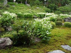 2015.6 京都②~半夏生の庭(両足院)と新京極の寺院