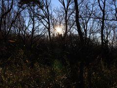 2015年1月12日:都立桜ヶ丘公園 ドックラン&公園内丘陵地