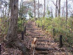 2015年2月11日:武蔵野の森探訪 浅間山公園