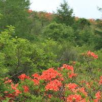 霧ヶ峰~萌木の村 初夏の美しい花々と清々しい空気を満喫