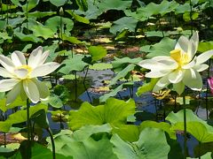 万博公園 日本庭園の散策と昼食 中巻