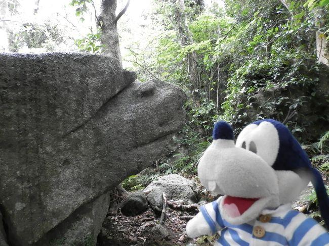 グーちゃんだよ。<br />足摺岬の主と呼ばれるグビラにご挨拶。<br />そしてこの地の景観を代表する<br />白山洞門を楽しみお宿へチェックイン!<br />さっそく足摺温泉に浸からせていただくの。<br />わーーい!