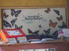 ルアンプラバーン郊外の、Kuang Si の滝近くの蝶々の楽園。オランダ人の経営する Butterfly Park。