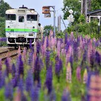 初夏の北海道、道東地方を巡る旅 ~オホーツク海周辺に咲き広がるルピナスを見に訪れてみた~