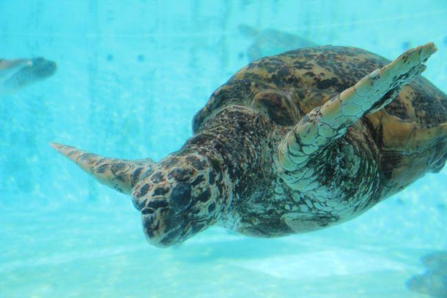 201505-01_美ら海水族館 / Churaumi Aquarium in OKINAWA