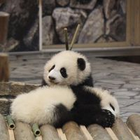 2015年GW 双子の赤ちゃんパンダに会いに白浜へ