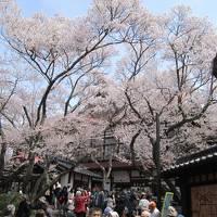 高遠コヒガン桜とあんずの里