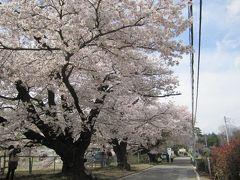 山高神代桜と清春芸術村