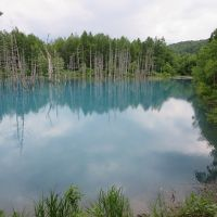 梅雨からエスケープ!大自然を味わう北海道3泊4日☆その3☆野菜ゴロゴロカレー食べて、青い池・いろんな木にご挨拶するのだ(^o^)/