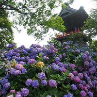 ふらっと出かけた埼玉妻沼で、あじさい寺と聖天山を知りました。