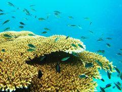 タオ島ナンユアンでリベンジdiving撮影 ?1・ サムイ島再訪