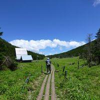 夏の北八ヶ岳 2 ~北横岳から縞枯山荘へ~