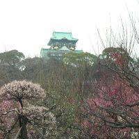ついでに大阪観光 梅まつり