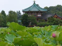 上野恩賜公園、うえの夏まつり、そして上野の老舗