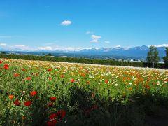 丘一面に広がる花々を愛でるファーム富田、かんのファーム/北海道・富良野