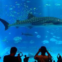 日本で最も人気の水族館再訪!