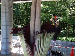 神代植物公園でショクダイオオコンニャクの花を見てきました