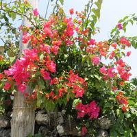 母親と行く八重山列島の旅!!!三日目、竹富島と石垣島