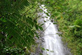 夏休みビーチ旅 2015 のんびりハワイオアフ島の旅⑤ MANOA FALLS TRAIL