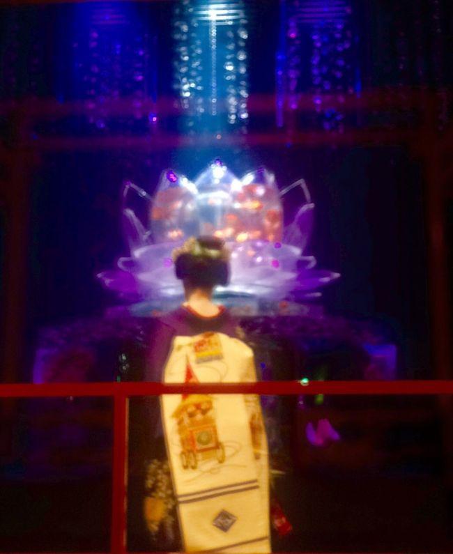【アートアクアリウム2015<br />~江戸・金魚の涼~<br />ナイトアクアリウム<br />「舞妓ナイト」東京編!】<br />----------------<br />7月26日早朝、友人から電話あり。<br />「○○!27日!日本橋!夜10時!」<br />と、一言!電話は切れました(ー ー;)。<br /><br />∑(゚Д゚)特殊部隊の暗号?<br /><br />と思いましたが、<br />電話口から駅のアナウンス?電車待ちで要件だけ急いで告げた様?<br /><br />「メール!詳しい内容求む!」<br />私のメールに対し友人の返信内容は、<br /><br />「祇園の佳つ智さん。秋、芸妓。<br />明日夜10時、日本橋三井ホール喫煙所4日以内決定。」<br />(本人の了承を得てのコピペです)。<br /><br />「日本橋三井ホール」をGoogle検索して、事と次第がみえて来ました。<br /><br />つまり、友人の伝えたい内容とは、、