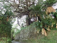 徳之島で地産地消の食を楽しみながら見どころを巡る島内一周ドライブの旅