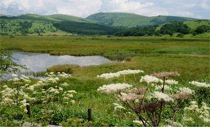 高原の夏休み1日目 花いっぱいの霧が峰 車山高原・八島ヶ原湿原