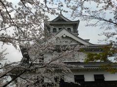 長浜豊公園(長浜城)の桜は満開でした~!◆遅めの桜を求めて滋賀県北部へ≪その3≫