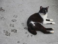 猫村で猫と戯れ、十分へ / ホウトン、十分、瑞芳、新北投温泉 / 台湾