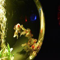 祭りの前の熱帯夜。金魚も踊る日本橋「アートアクアリウム2015」