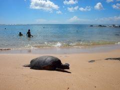 夏休みビーチ旅 2015 のんびりハワイオアフ島の旅⑨ レンタカーでノース Laniakea Beachでホヌに遭遇