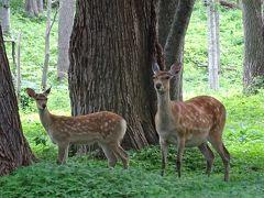 知床でアウトドアざんまい!①~ウトロで鹿・キツネに出会う~