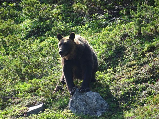 せっかく北海道に来たんだから、百名山は登らなきゃね!<br />自分の登山スキル的には、ややきつすぎな気がしたけど、朝早く出発して、時間に余裕を持てばきっと大丈夫。<br />登山口付近、前週のニュースで「ヒグマが観光客の車にのしかかる」って話題になってたけど、きっと大丈夫。<br /><br />□1日目  移動<br />□2日目  知床五湖、カムイワッカの滝、シーカヤック<br />■3日目  羅臼岳<br />□4日目  ホエールウォッチング、シマフクロウ観察<br />□5日目  清里町へ移動<br />□6日目  斜里岳登山<br />□7日目  摩周湖経由で帰路