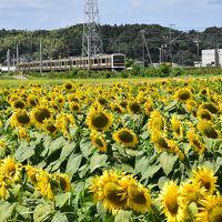 真夏のひまわり畑を走る南房総のローカル線(千葉)