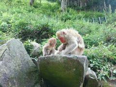 国の観光にも大きく貢献している地獄谷野猿公園