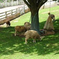 昼食前に六甲山牧場に立ち寄りました。