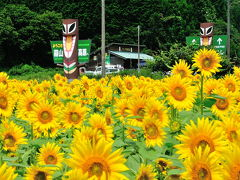 夏休みのオートキャンプ(1)・キャンプ場編(休暇村蒜山高原オートキャンプ場)