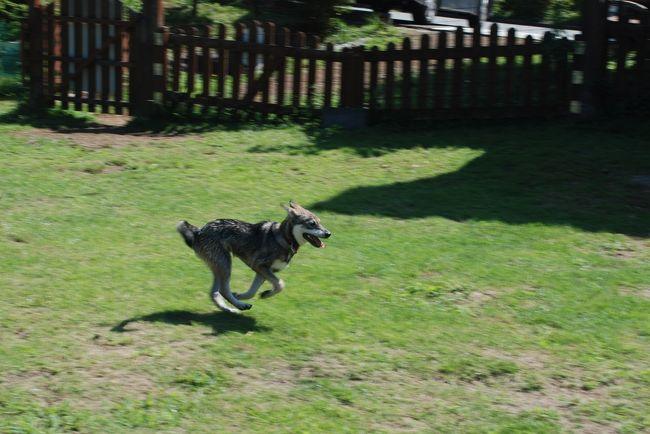 新しく家族になった愛犬と一緒に、伊豆高原に行ってきました。<br /><br />突然思い立っての旅行でしたが、ペット連れの旅行情報の多さにびっくり。<br />犬と一緒の旅、今までと違った景色が見えました。<br /><br />初めての犬旅を経験し、分かったことが一つ。<br />伊豆高原の夏は暑い!<br />高原という言葉に涼しさを期待してはいけませんでした。