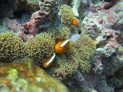 沖縄ダイビング旅行5日目も水納島でダイビング