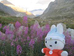グーちゃん、スイスアルプスへ行く!(サンモリッツ到着!寒い!編)