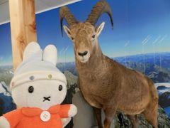グーちゃん、スイスアルプスへ行く!(ディアボレッツァ展望台で混浴?編)