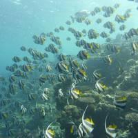 モルディブのリゾートでダイビング