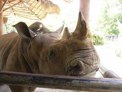 子連れだって楽しいパタヤ in 2015 (3) カオキアオ動物園経由でバンコクへ