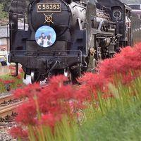 秩父鉄道の「SLパレオエクスプレス」を追いかけて、彼岸花が咲き広がる長瀞に訪れてみた
