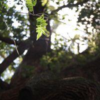遠くへ・・長崎を訪ねる旅
