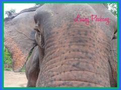 癒されたいならラオスへ!④象さんの住む街、ルアンプルパン