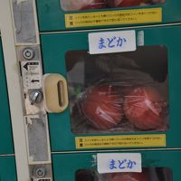 おくのほそ道 第1回 ⑧  観世寺(黒塚)・文字摺石・医王寺 「桃を売る自販機のあり桃を買ふ」