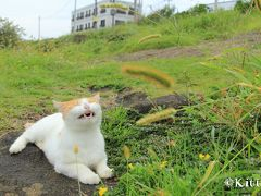 ~~海岸で猫と戯れ、中秋の名月を愛でよう @三浦半島 +おまけのコスモス&彼岸花~~